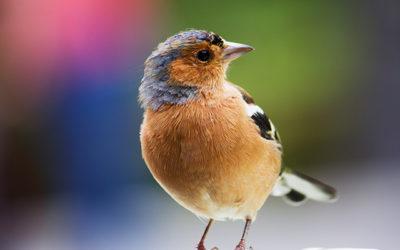5° Fiera Nazionale Primaverile degli Uccelli